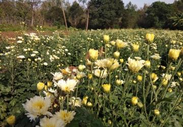 SRA Organic Garden 3